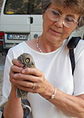 margaret clurow little owl thumbnail